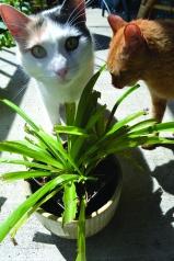 plants-spider